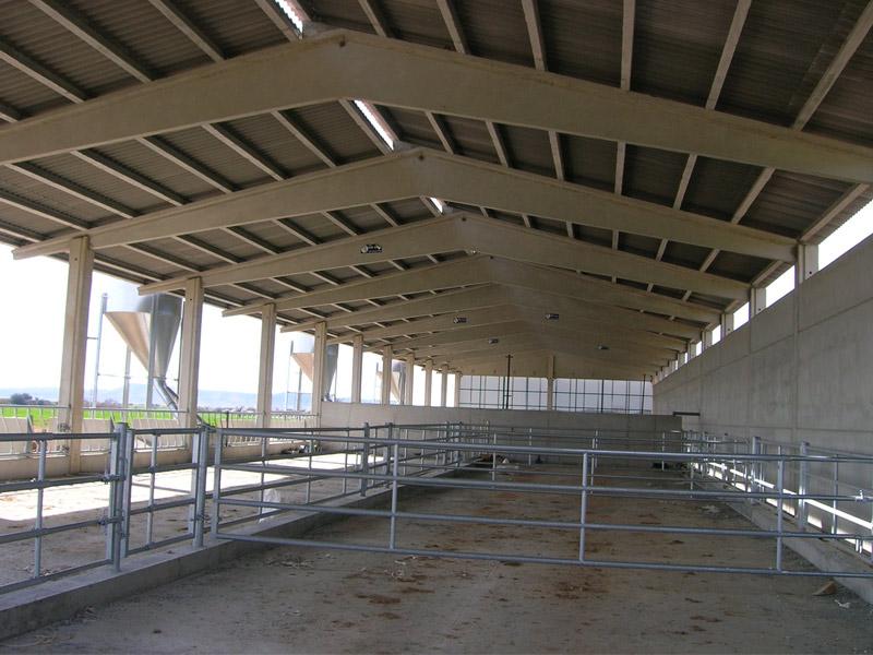 Nave bovino de hormigón prefabricado